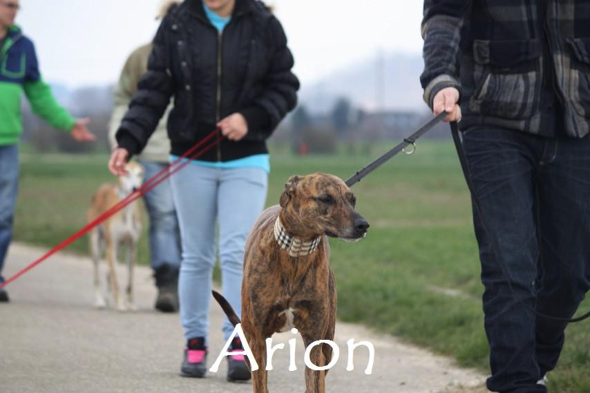 Arion_8720.jpg