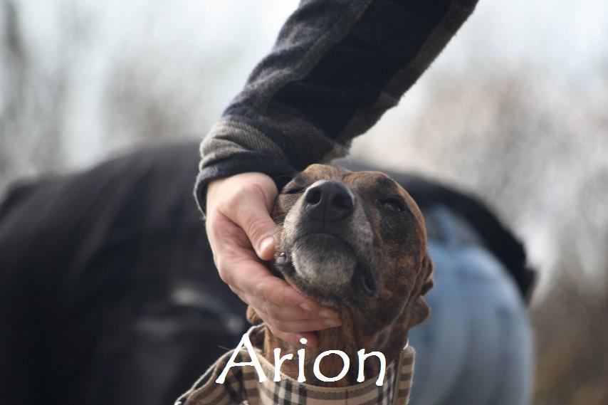 Arion_8909.jpg