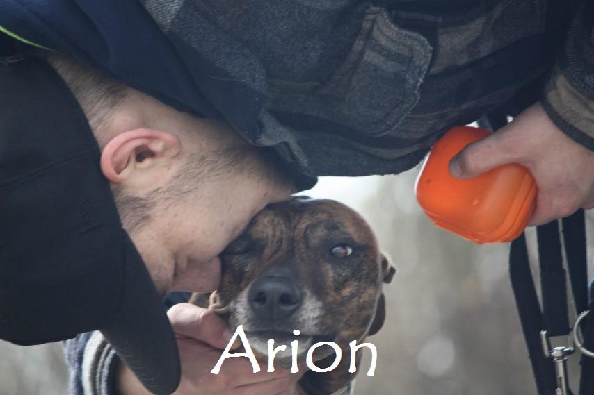 Arion_8910.jpg