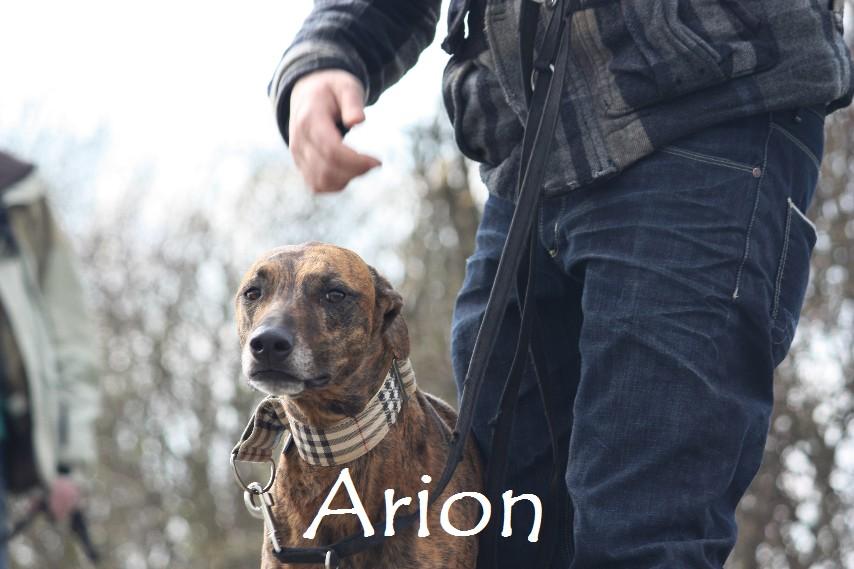 Arion_8911.jpg