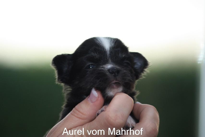 Aurel__8006.jpg