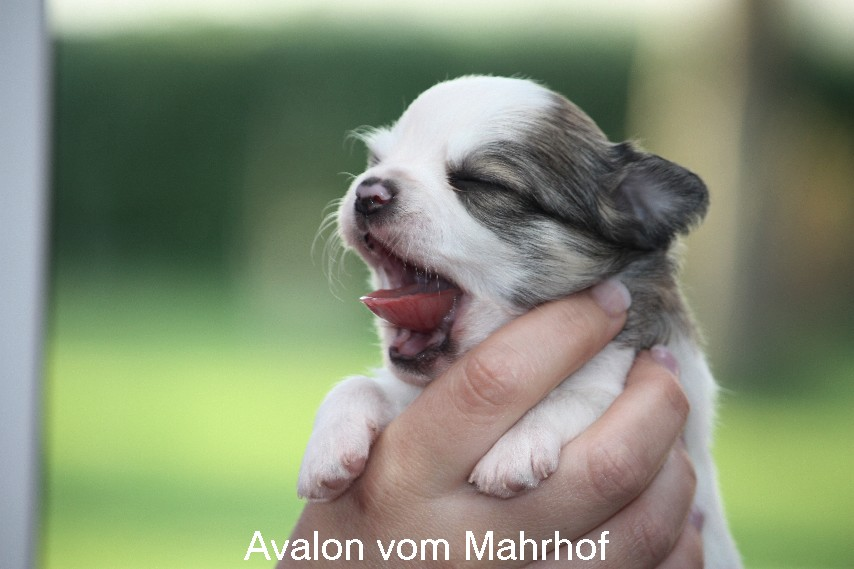 Avalon____7985.jpg