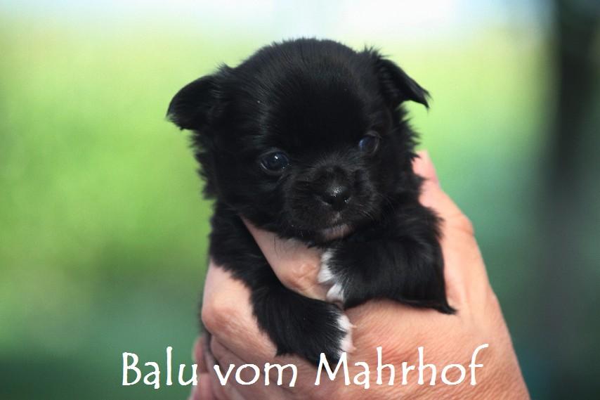 Balu_2237.jpg