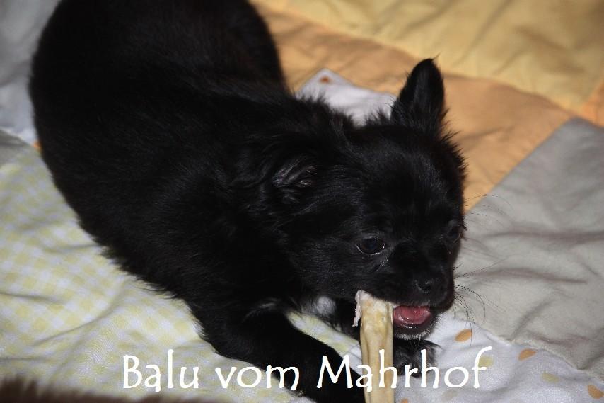 Balu_7109.jpg