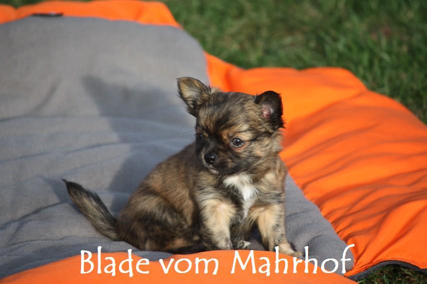 Blade__3878.jpg