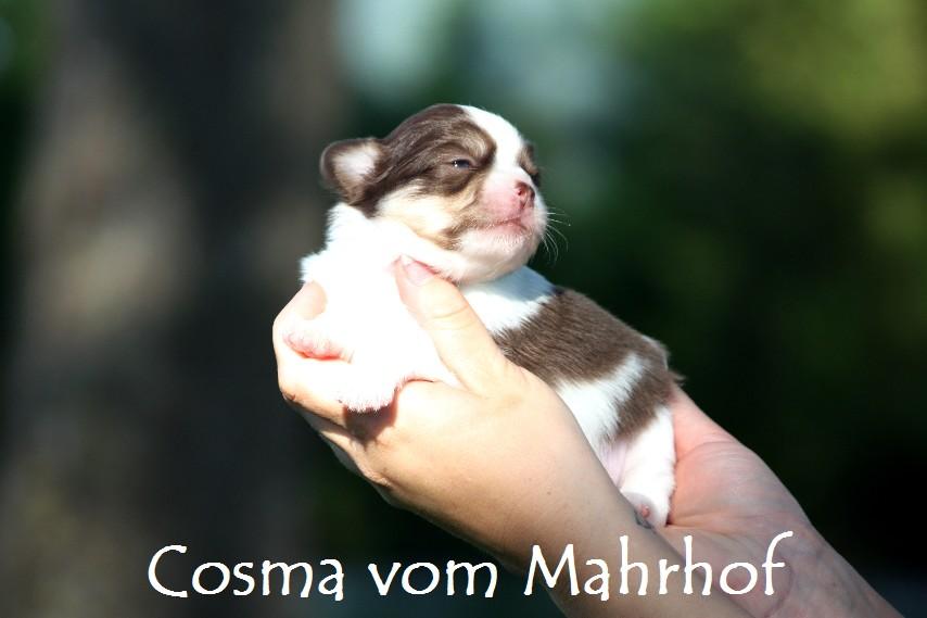 Cosma_5043.jpg