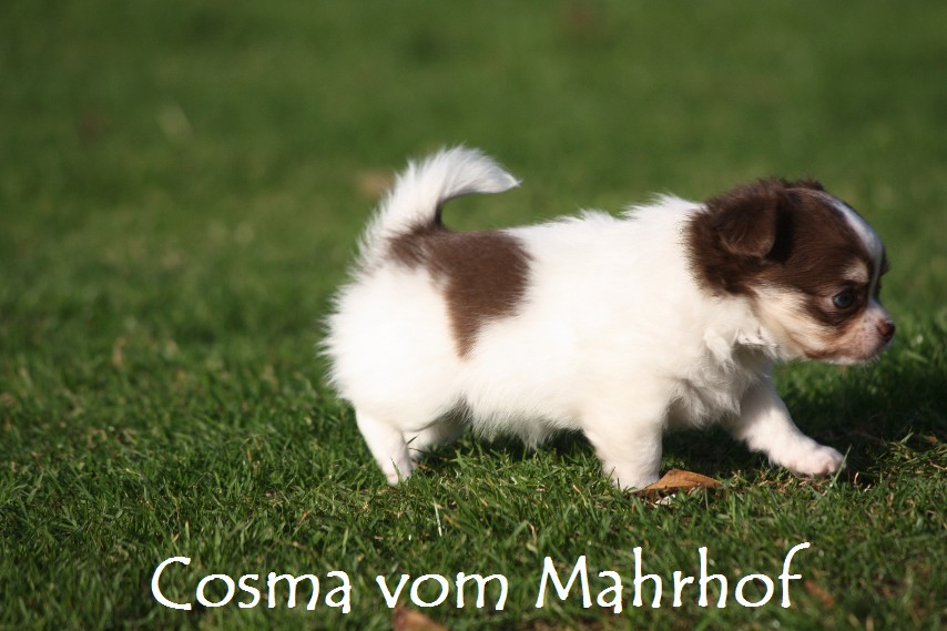Cosma_6478.jpg