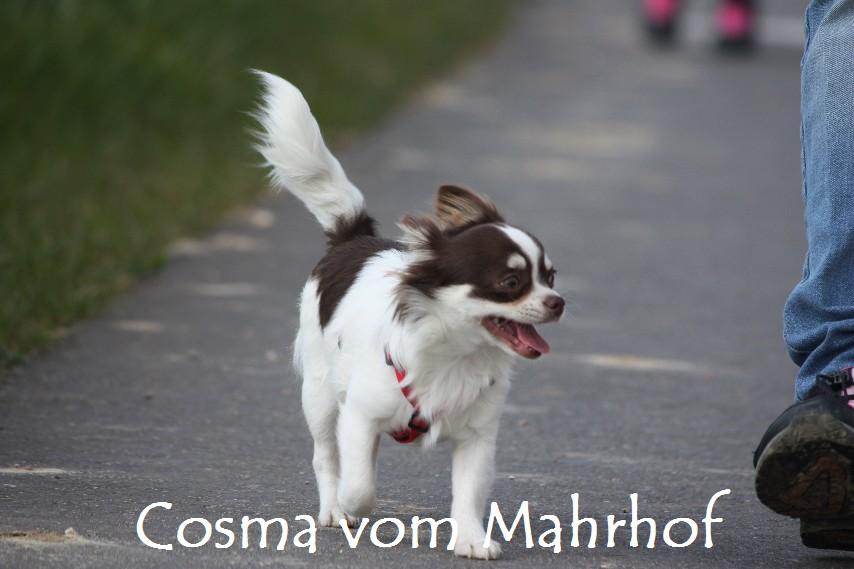 Cosma_8821.jpg