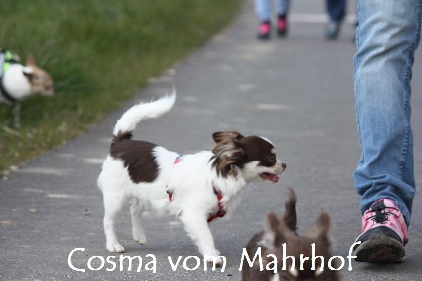 Cosma_8822.jpg