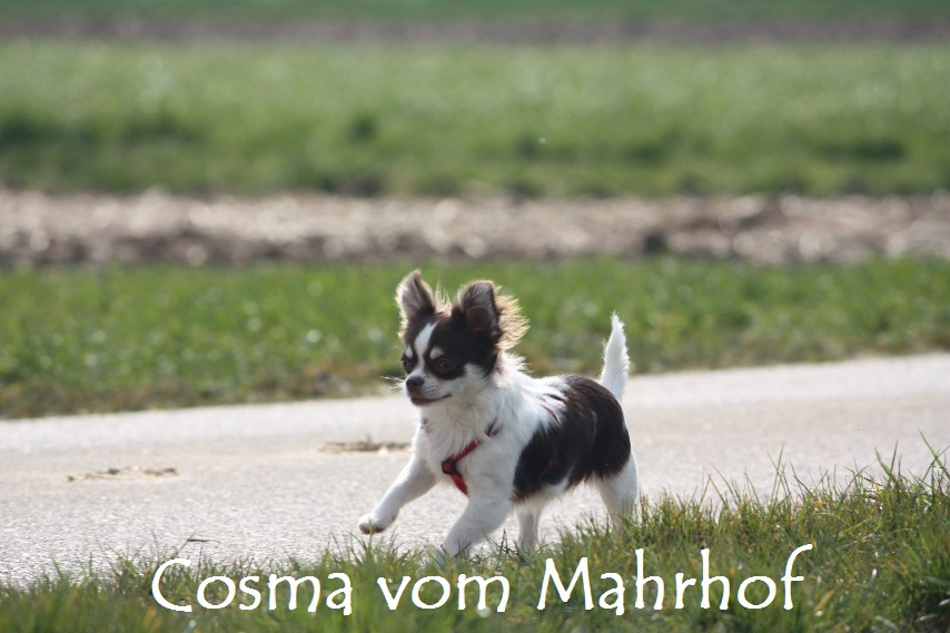 Cosma_8871_001.jpg