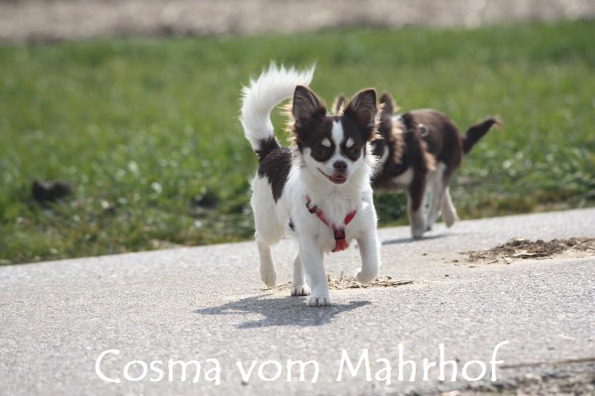 Cosma_8881_001.jpg