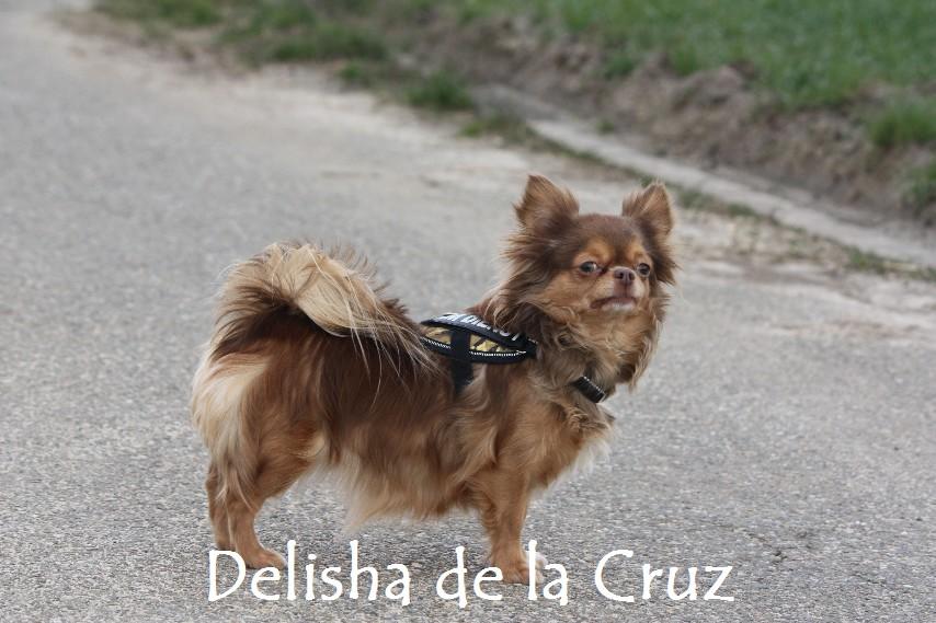 Delisha_8719.jpg