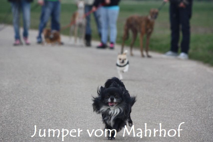 Jumper_8708.jpg