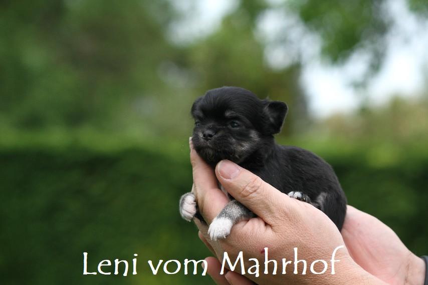 Leni_3252__7_.jpg