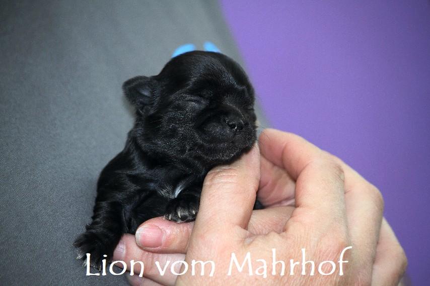 Lion_2807.jpg