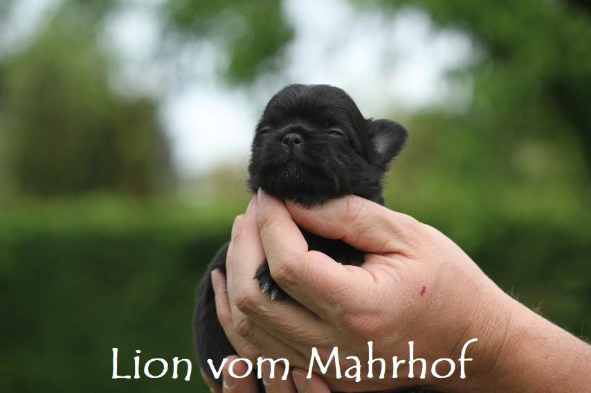 Lion_3262__3_.jpg