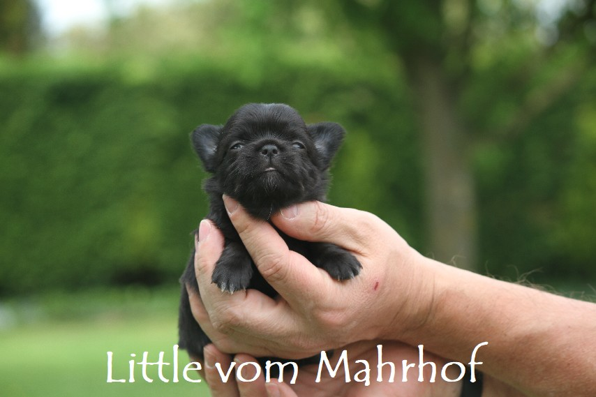 Little_3284__2_.jpg