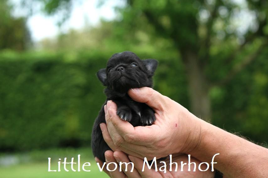Little_3284__6_.jpg