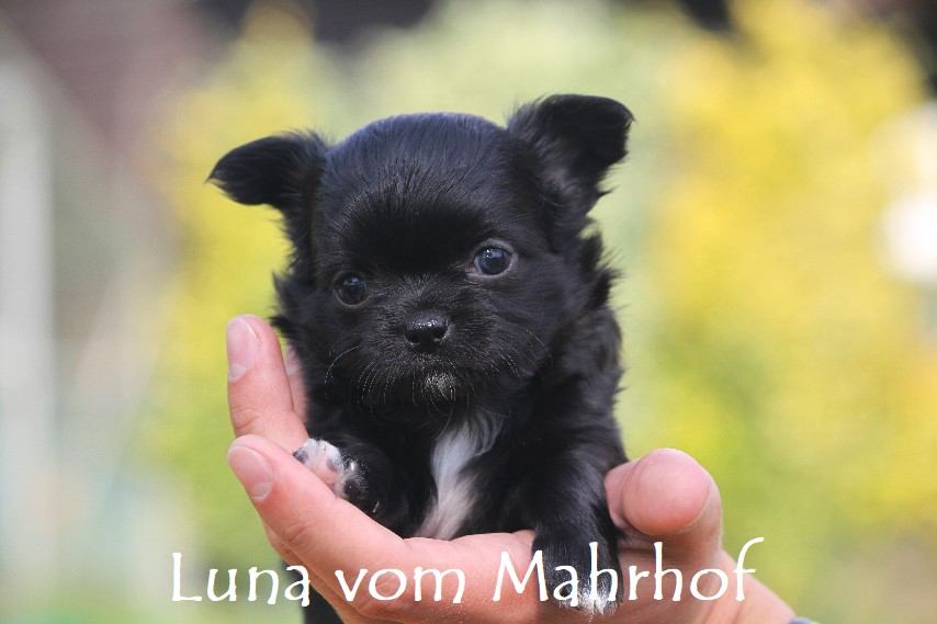 Luna-Lilli_3852__2_.jpg