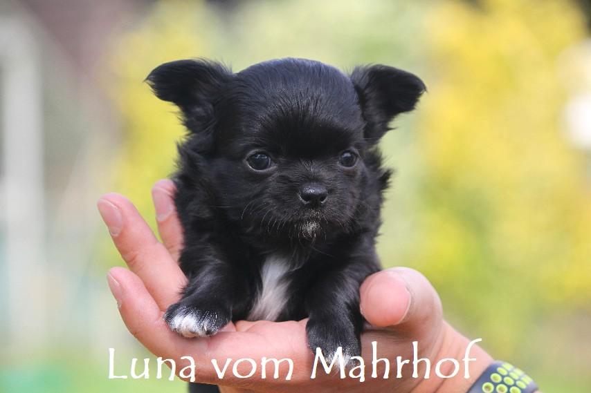 Luna-Lilli_3852__3_.jpg