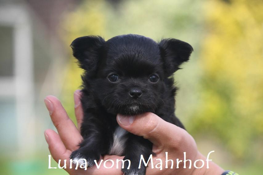 Luna-Lilli_3852__5_.jpg
