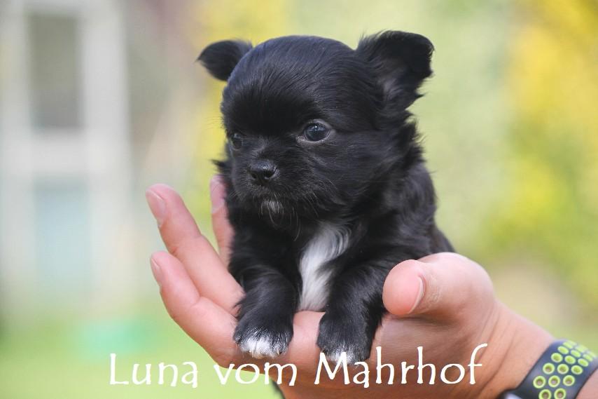 Luna-Lilli_3852__6_.jpg