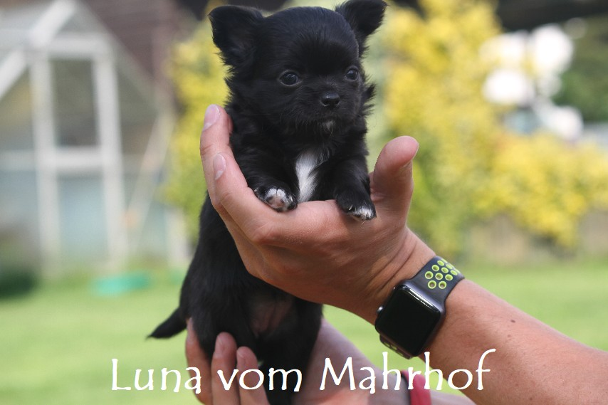 Luna-Lilli_3852__8_.jpg