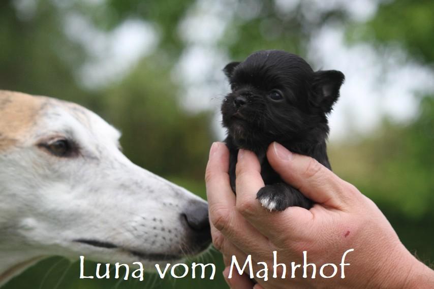 Luna_3237__1__001.jpg