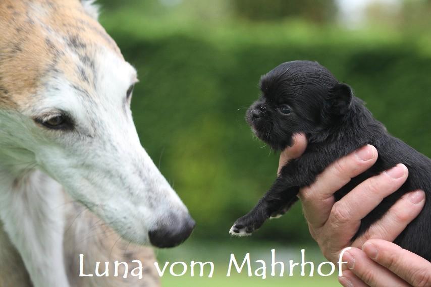 Luna_3237__4_.jpg