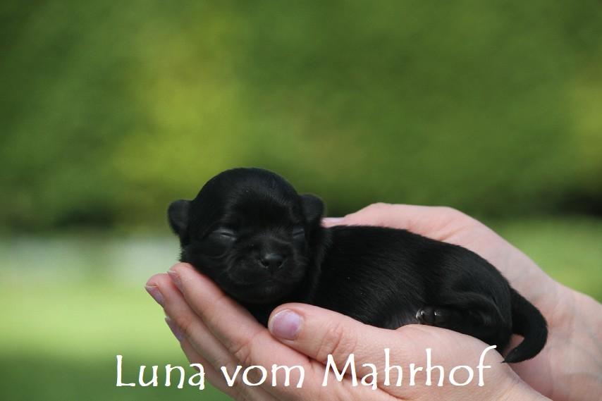 Luna____2713__8_.jpg