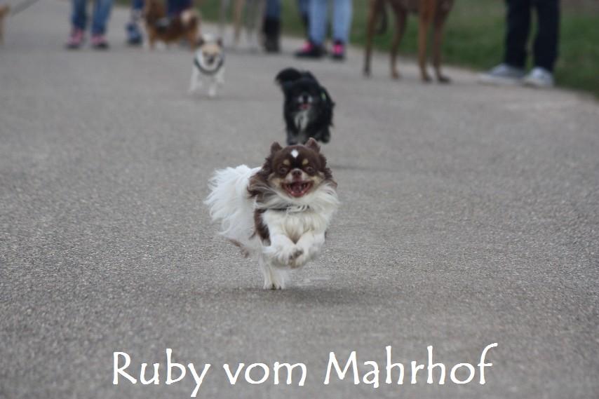 Ruby_8706.jpg