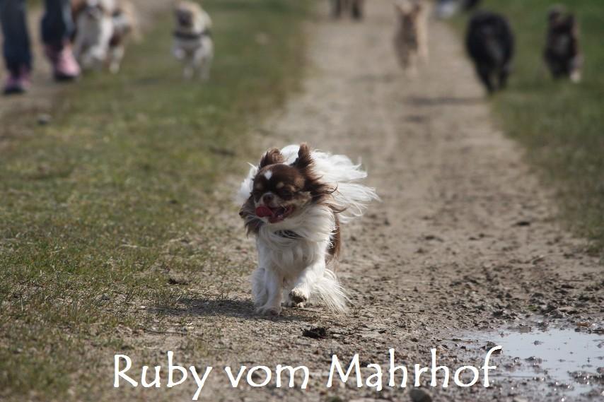 Ruby_8742.jpg