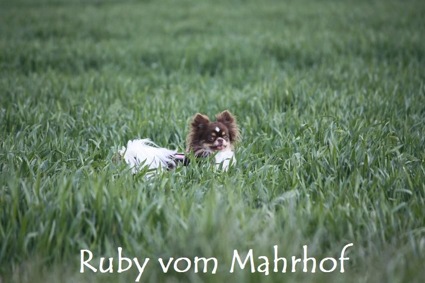 Ruby_8828.jpg