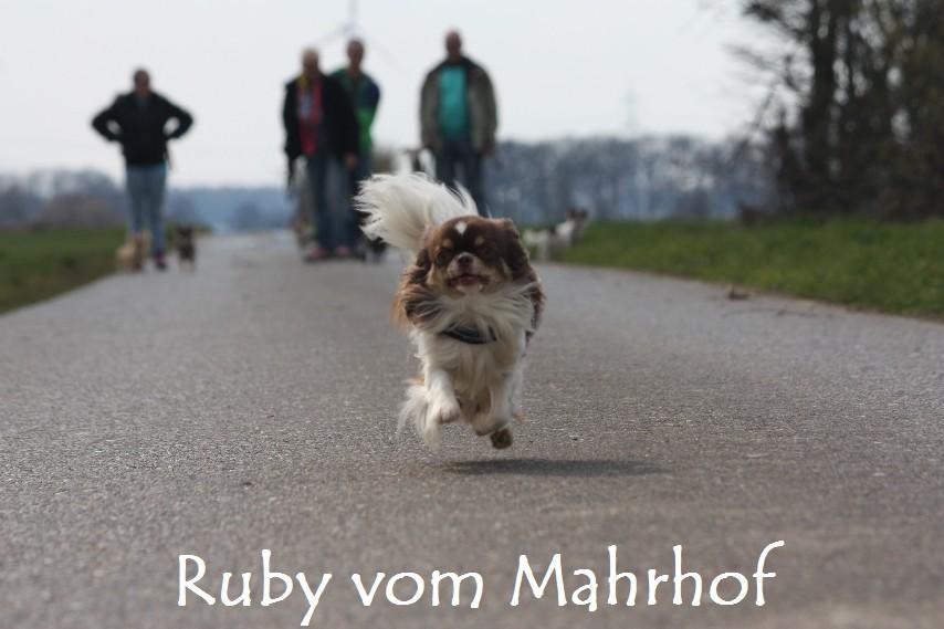 Ruby_8897.jpg