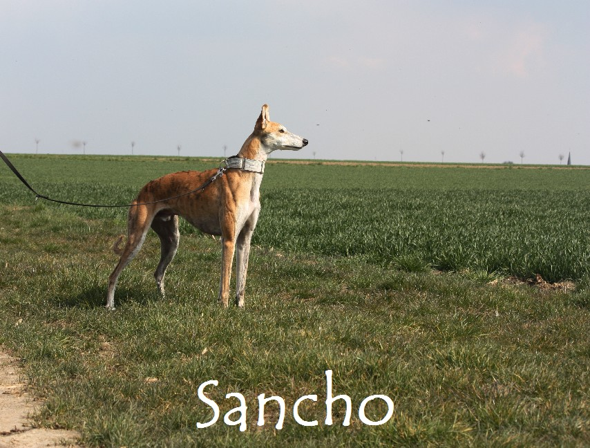 Sancho_8781.jpg