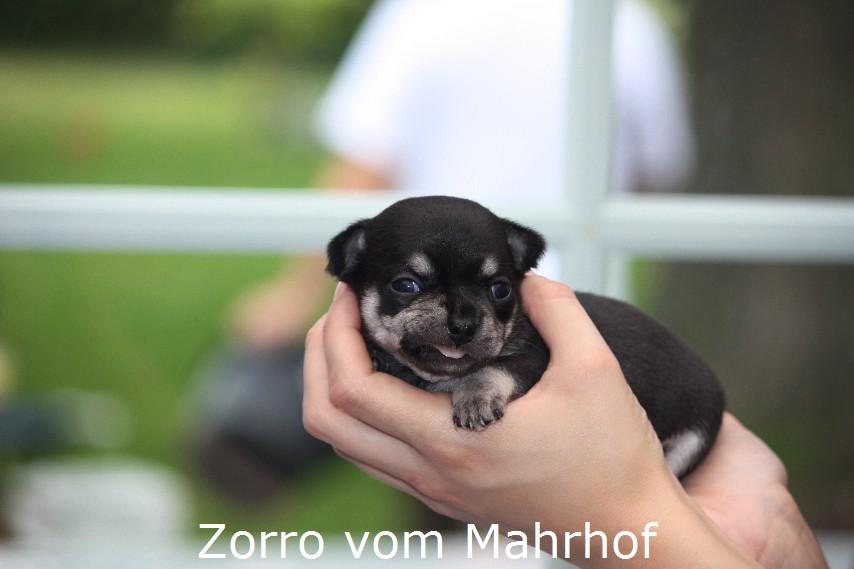 Zorro_5505.jpg