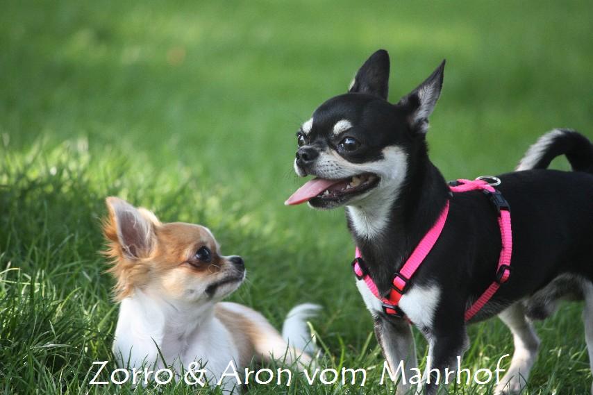 Zorro_und_Aron_1248.jpg