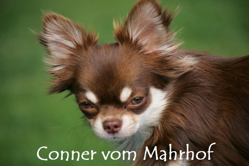 conner_____4M7884__1_.jpg