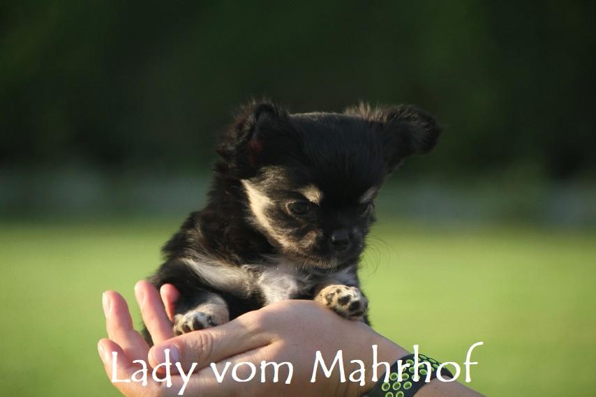 lady_4645__13_.jpg