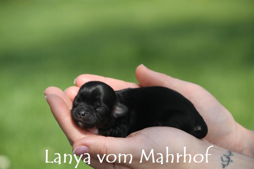 lanya_2610__7_.jpg