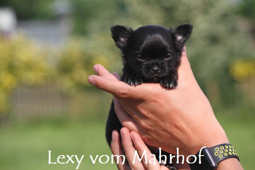 lexi_3887__14_.jpg