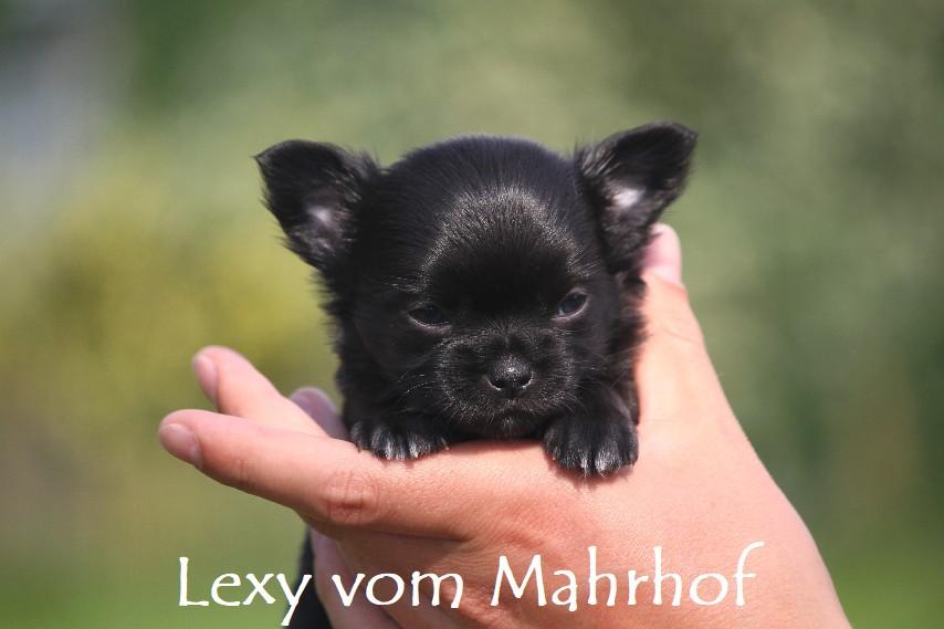 lexi_3887__6_.jpg