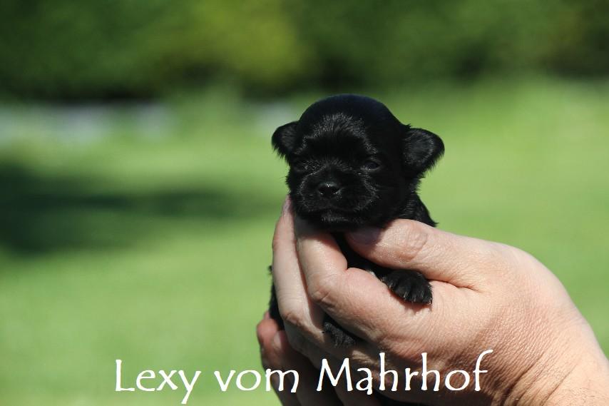 lexy2987.jpg