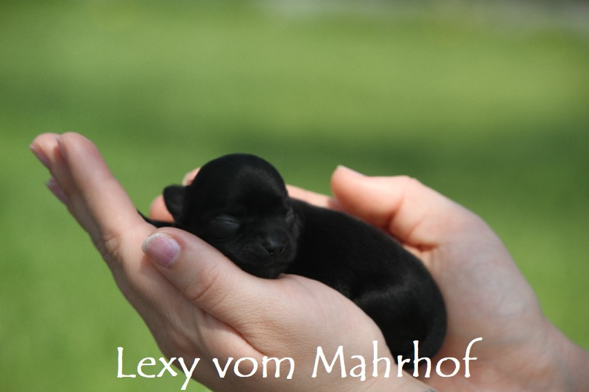 lexy_2631__1_.jpg