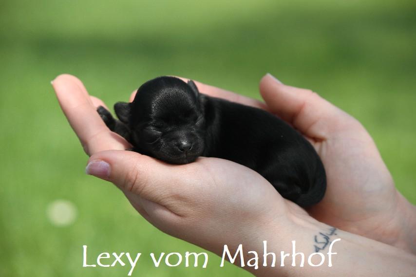 lexy_2631__4_.jpg