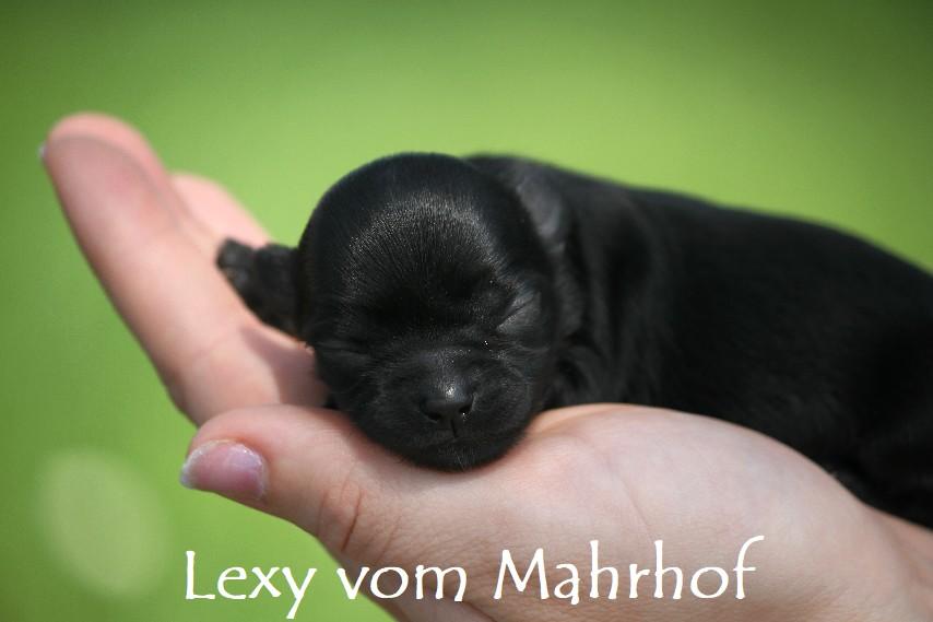 lexy_2631__6_.jpg
