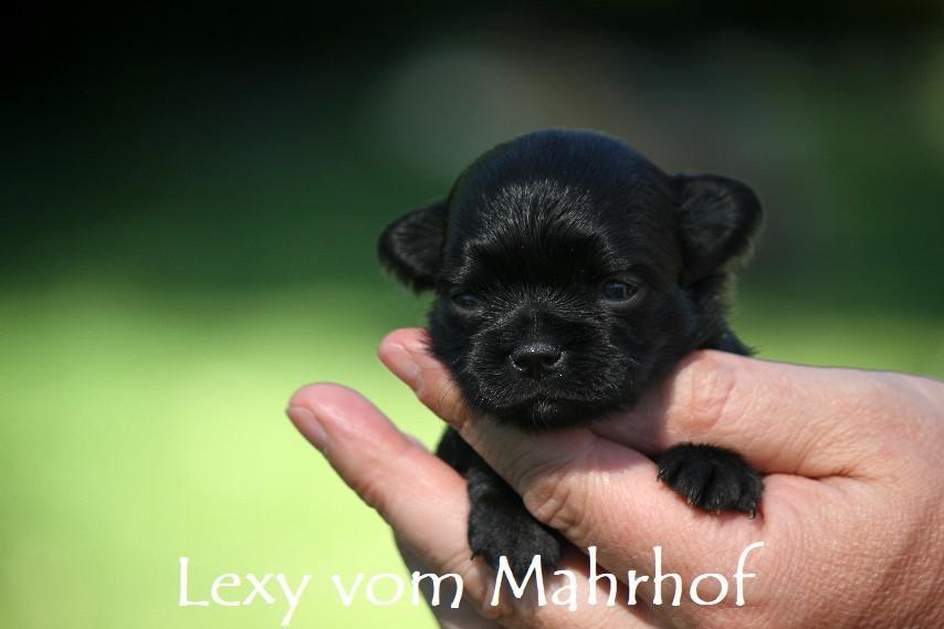 lexy_2985__9_.jpg
