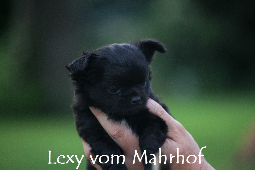 lexy_4278__4_.jpg