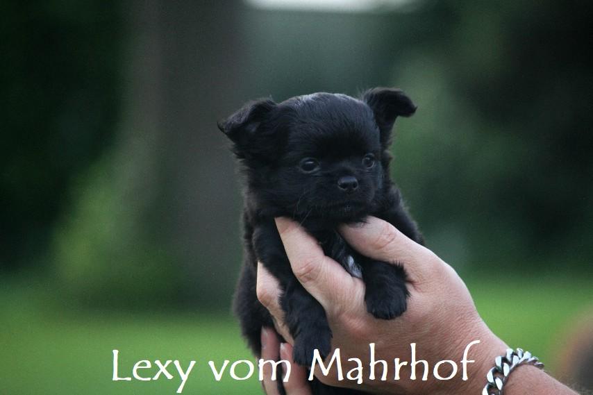 lexy_4281.jpg