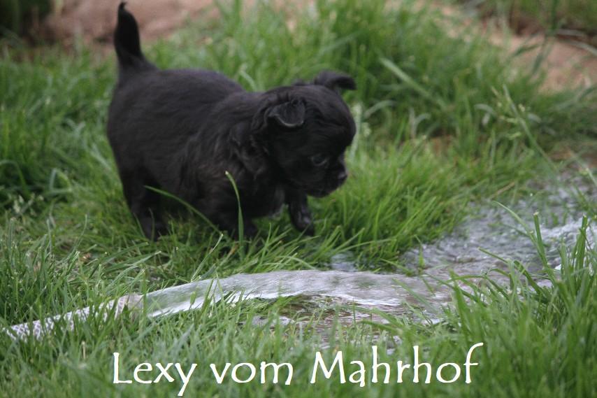 lexy_4314__1_.jpg